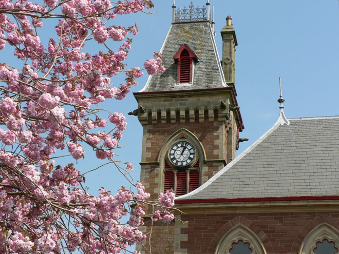 clock-tower-cherry-blossom